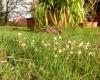 Garten / Impressionen